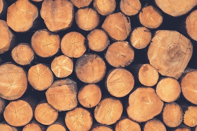 Путин поручил запретить экспорт необработанной древесины