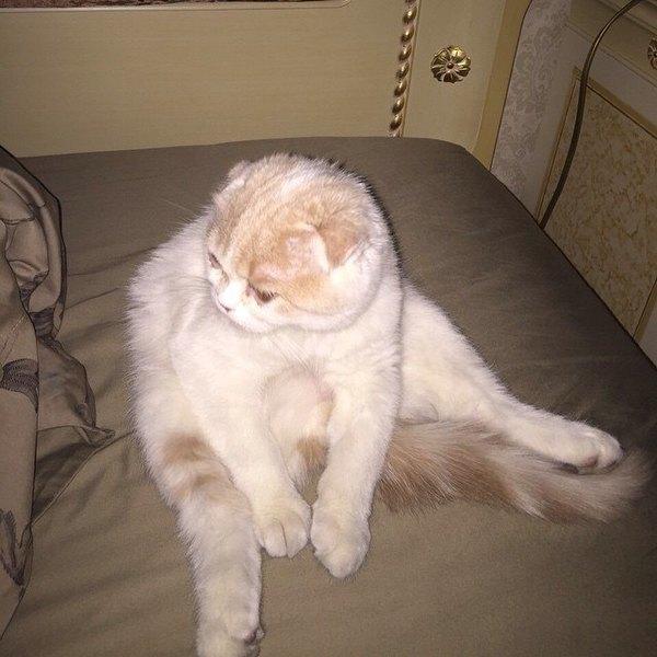 Лера Кудрявцева завела своему коту Инстаграм