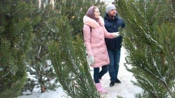 Роскачество рекомендует выбирать живые елки