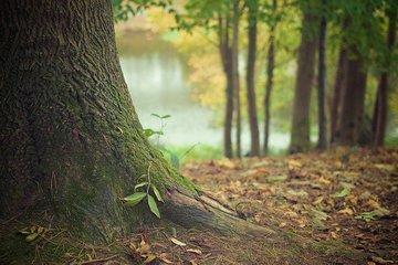 Россия может нанести удар по лесопромышленному комплексу Китая